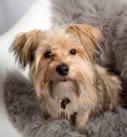 dog-family-photographer-mansfield-nottinghamshire-nottingham-mansfield