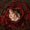 newborn baby girl sat in a nest, composite photo, mansfield photographer